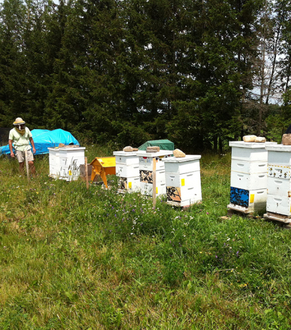 Tending to the Hives
