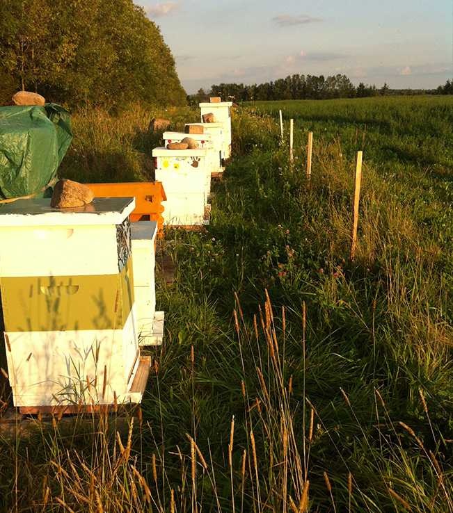 Working Hives